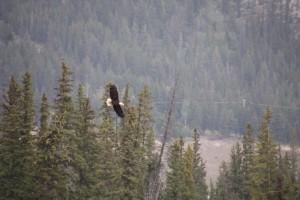 19 eagle