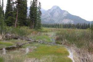 19 wetlands