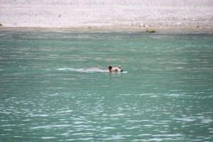 06 zwemmende beer
