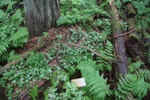 20 hemlock grove