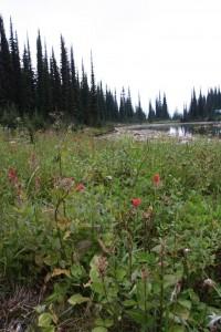 20 meadows
