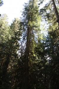 23 grove trail