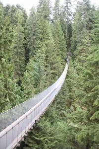 25 suspension bridge