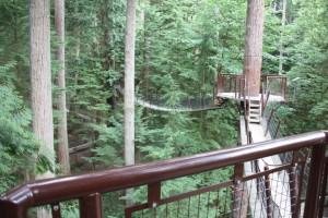 25 treetops adventure