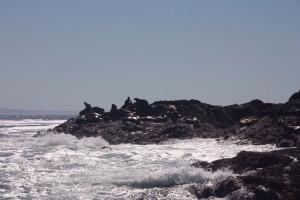 04 zeeleeuwenrots