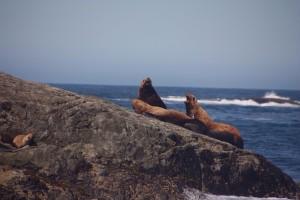 04 zeeleeuwen