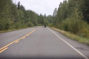 08 beer op de weg