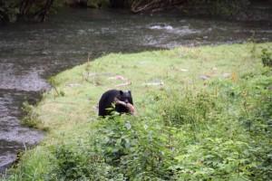 09 zwarte beer