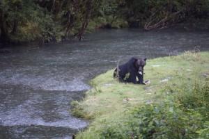 09 grizzly eten