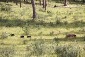 14 moeder en cubs